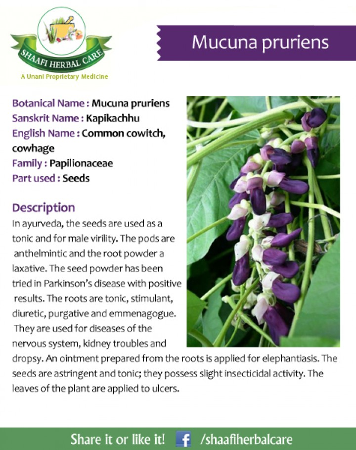 What are the benefits of mucuna prurient?